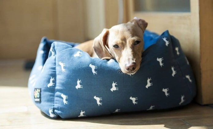 Give furry friend comfy sleep with woven dog bed
